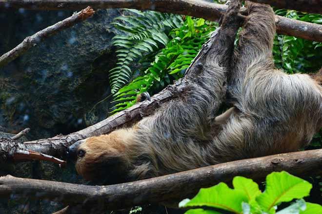 Appeso come un bradipo!