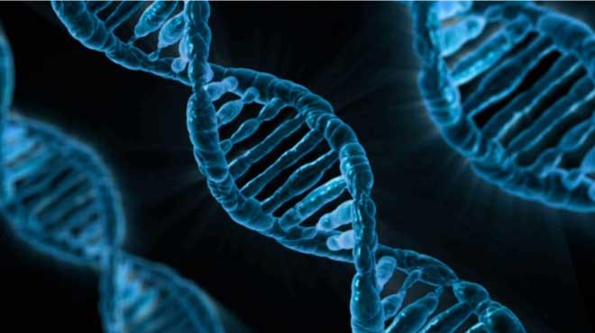"""Gene del dormiglione """"ABCC9"""""""