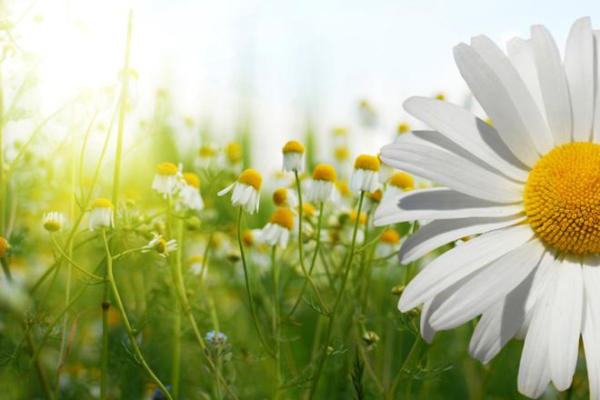 Allergia al polline? 15 rimedi per smettere di soffrire!