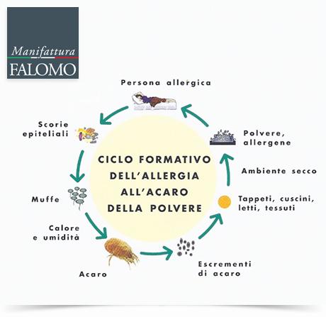 Il ciclo di vita dell'acaro: 4 semplici consigli per combattere gli acari!