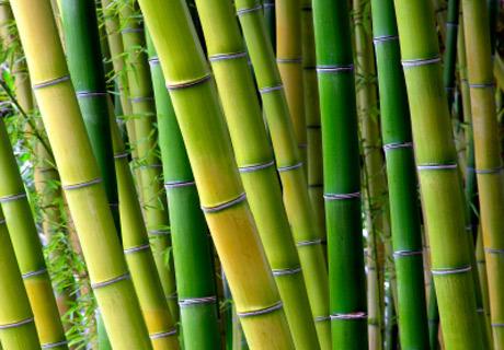Materassi canne di bamboo