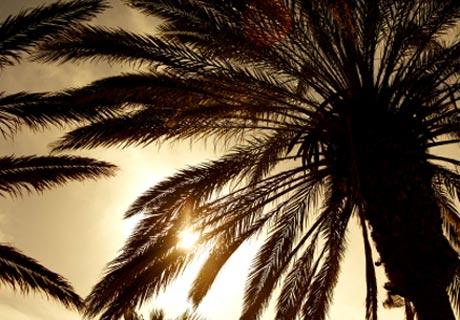 Materassi foglie di palma