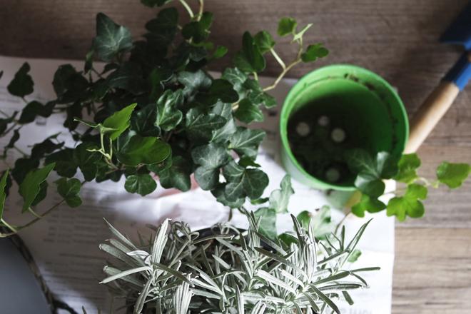 6 piante da tenere in camera per dormire meglio - Piante da tenere in camera da letto ...