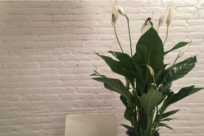 7 piante da tenere in camera per dormire meglio!