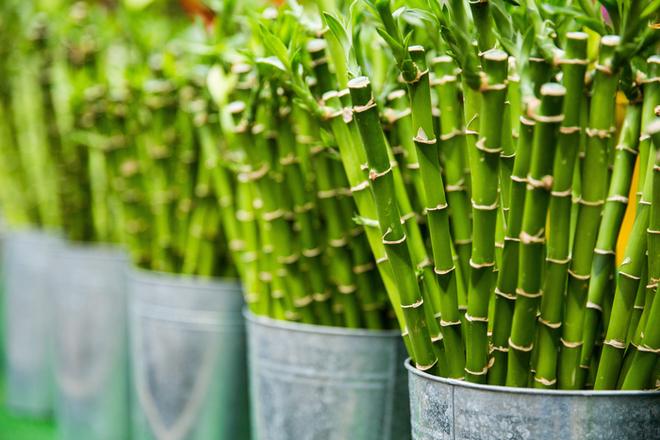 Come viene utilizzata la fibra di bambù?
