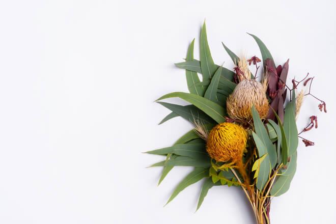 Fiori australiani: i rimedi naturali per dormire bene